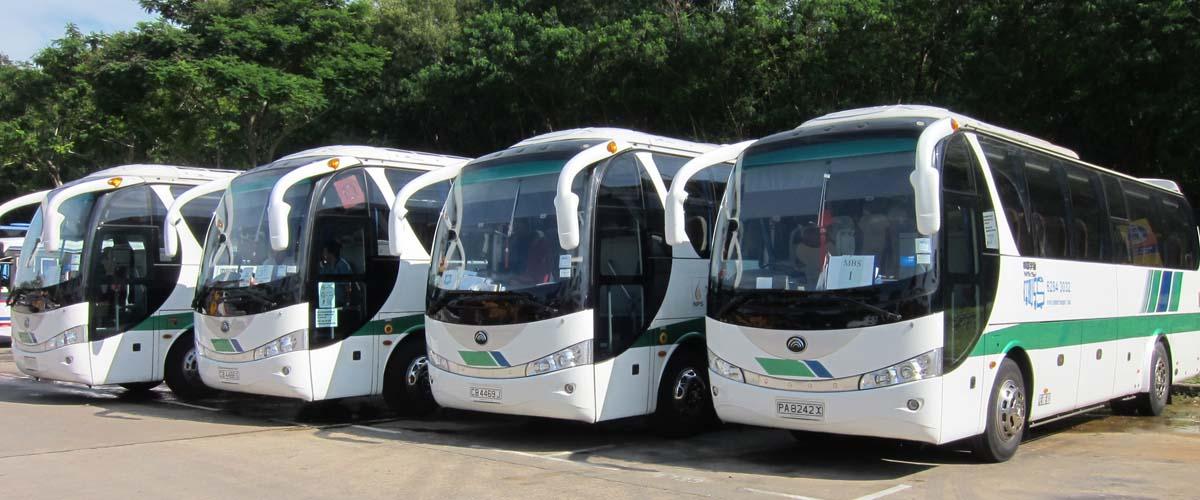fleet of buses